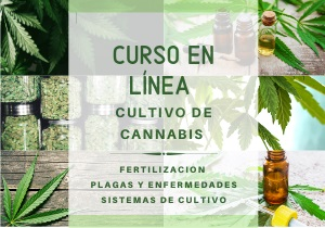 curso autocultivo on line mexico