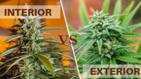 interior-vs-exterior cultivo cannabis
